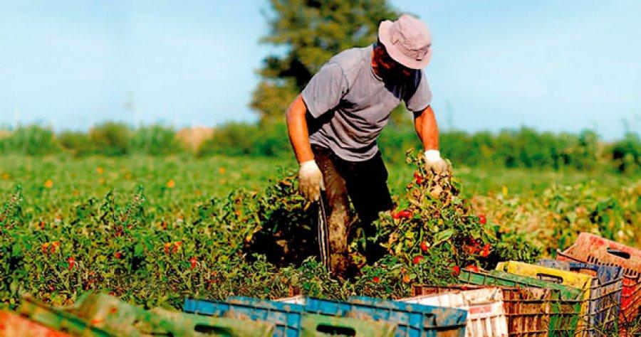 La Junta facilita el asesoramiento gratuito para agricultores  y ganaderos por parte de técnicos cualificados