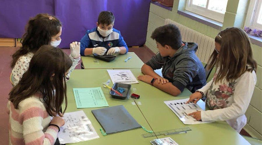 """CCOO tacha de """"demencial"""" el cierre de líneas escolares en las actuales circunstancias"""